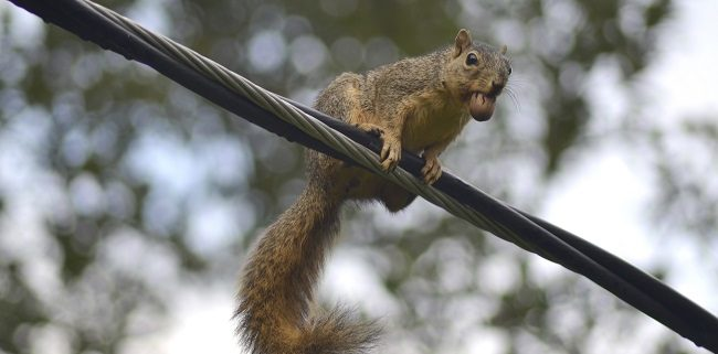 How Local Wildlife Can Affect a Building's Power