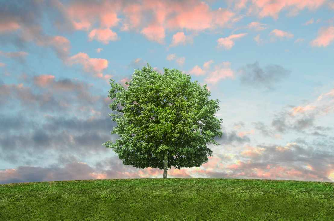 How Planting Trees Helps Combat Global Warming