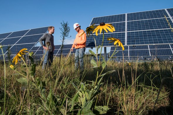 Ecological Impacts of Solar Farms Replacing AgriculturalFarms