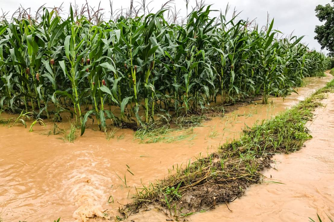 How Water Pollution Can HarmAgriculture