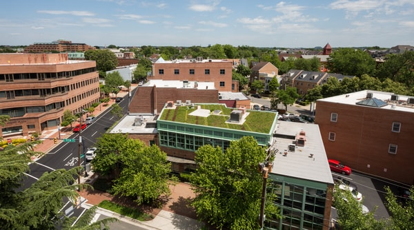 How Green Roofs Can Create Flood Resilience