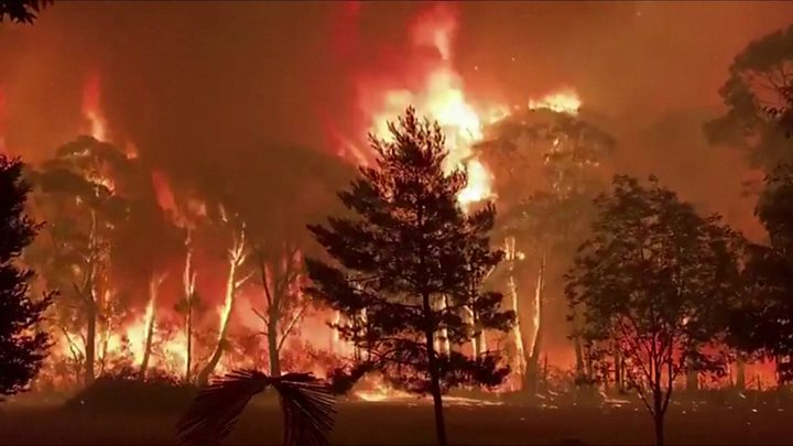 Why Wildfires Move From Treetop to Treetop