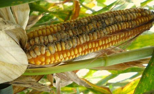 Food Supply Disruption