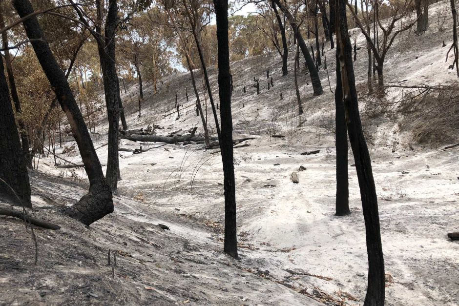 How Ecosystems Will Be Permanently Damage From the Australian Bushfires