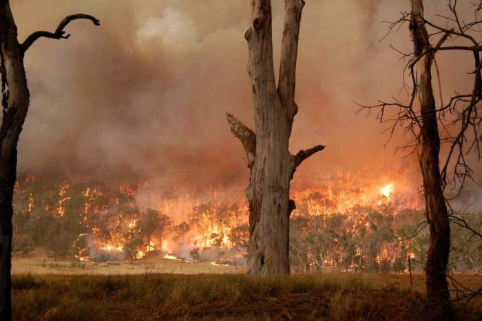 Black Saturday Bushfires, Australia