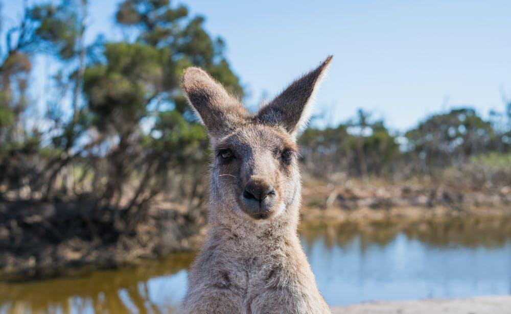How the Bushfires Might Pivot Australia's Position onClimate