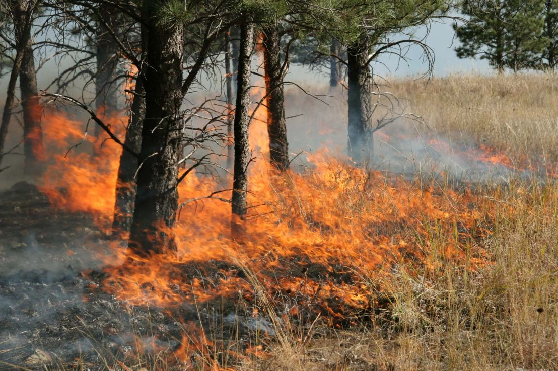 Why Timing for Prescribed Burns in Crucial for Wildfire Resilience