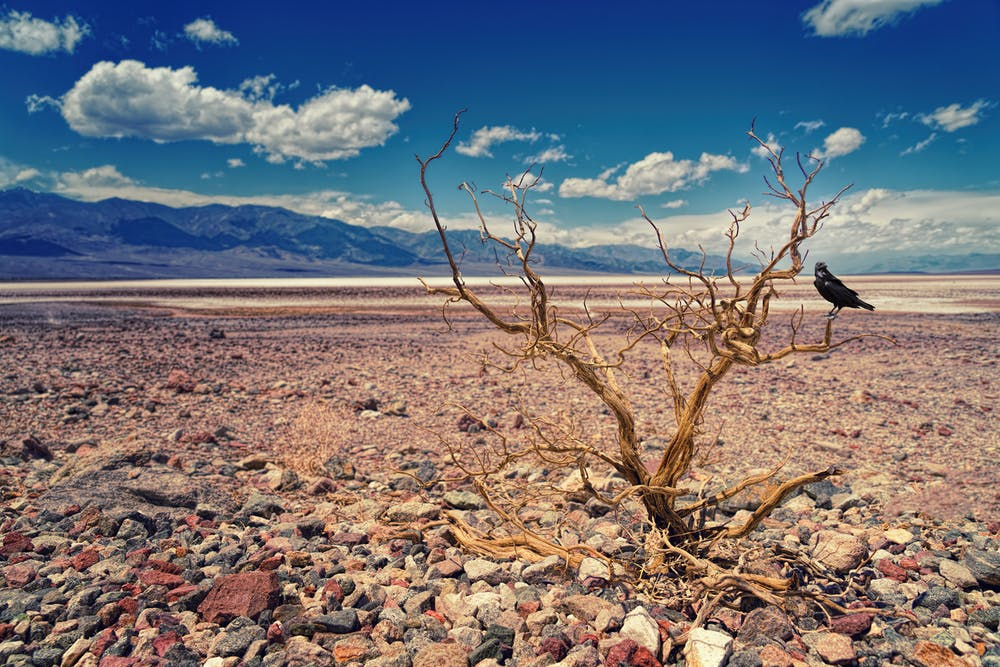 How Droughts Can Lead to Ecological Devastation