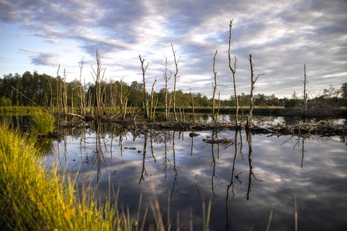 How Constructed Wetlands Can Build Climate Resilience