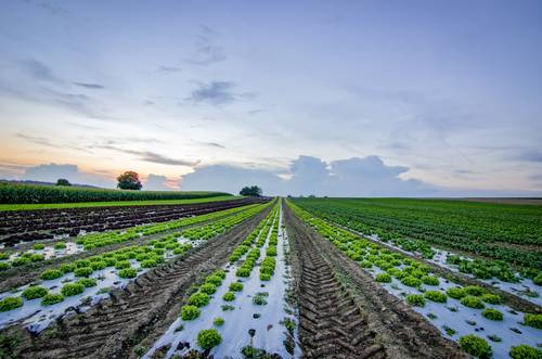 Flood Resilience for Crops