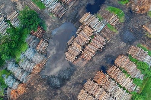 Why Mass Deforestation Will Lead to More GlobalPandemics