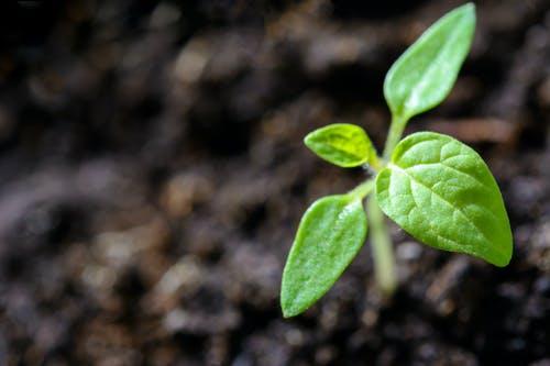 Soil Pollution Remediation