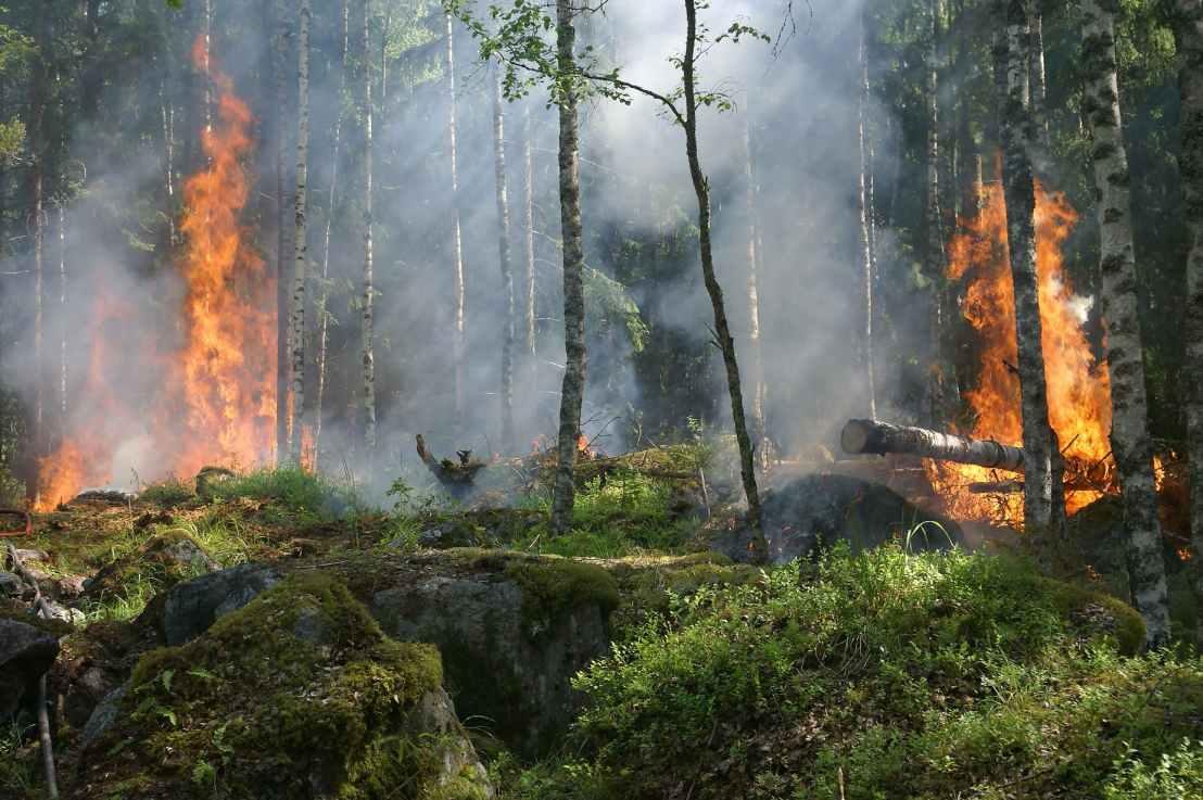 Wildfire Economic Resilience