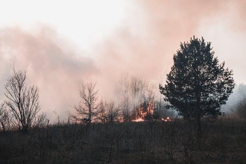 Cross-Border Wildfires