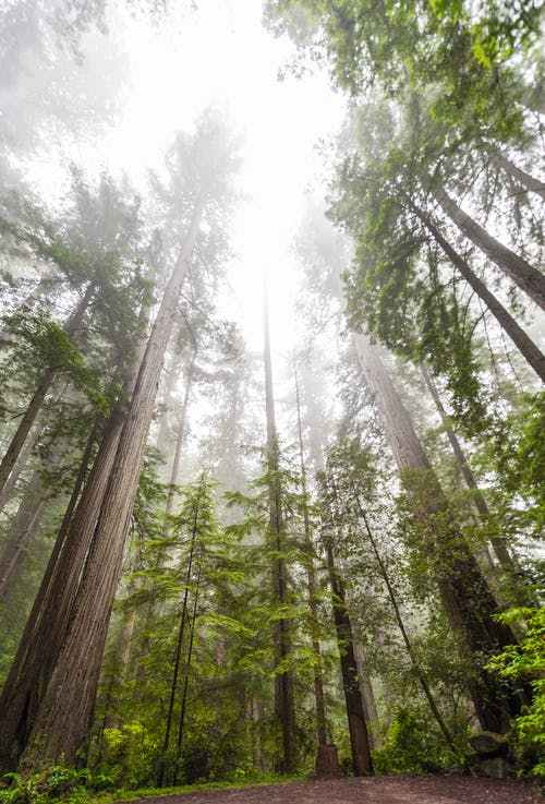 Why Tree Removal in Northern California for Wildfire Resilience is in Line With the Area'sEcology