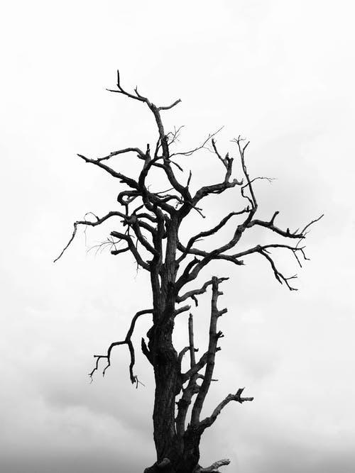 Wildfire Tree TrimmingMandates