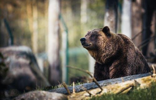 Adaptation and WildlifeConservation